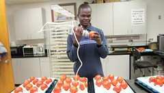 Researcher and Borlaug Fellow Issah Sugri in the lab