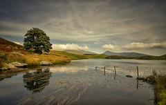 Corner Of Calm (Captain Nikon) Tags: llyndywarchen snowdonia northwales wales moody autumnal reflections peaceful lonetree fencing lowclouds mountains lake lakeoftheturfsod legends rhydddu snowdon