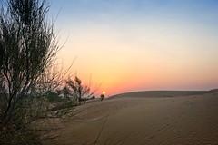 Dubai desert sunrise (Tiigra) Tags: sharjah unitedarabemirates ae 2013 dubai nature sky texture tree