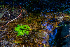 About down to a trickle (myaarhkoo1) Tags: fineart rock usa drought nature water stream streambed massachusetts caratunkwildliferefuge fall stones pineneedles newengland seekonk color photoart leaf branches lowwater audobon