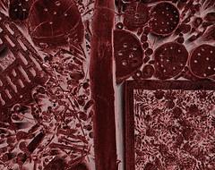Insect Hotel ~ Insektenhotel - Nature Park Geras - schnittmuster sewing pattern (hedbavny) Tags: wood trip shadow red summer abstract hot tree rot art nature forest insect hotel austria sterreich ast forrest sommer natur digitalart manipulation abstraction ausflug loch holz ste insekt schatten shady baum niedersterreich naturepreserve outing blumentopf heist ziegel bearbeitung schattig besucherzentrum gelocht insektenhotel geras bockerl unterschlupf lchrig schlupfloch nrodnparkpodyj nationalparkthayatal naturparkgeras tschechischegrenze