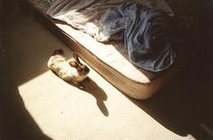 Chloe (Adele M. Reed) Tags: sun rabbit bunny film home 35mm sunny august chloe