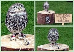 Ah! (Mike-Lee) Tags: jessie collage picasa owl westonpark sept2012