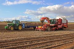 Harvesting Potatoes near Burnham (D H Wright) Tags: harvest burnham northlincolnshire potatoharvest liftingpotatoes grimmevaritron