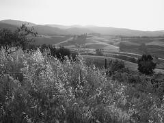 toskana BW16 (alec.bittner) Tags: blackandwhite bw italy landscape blackwhite scenery italia olympus tuscany zuiko e5 toskana blackwhitephotos tuscanylandscape