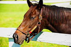 Wild Intention (Bear^) Tags: horse its ed mr lexington kentucky thoroughbred