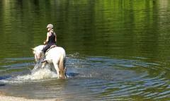 """Petit bain (Daniel Biays """" VOIR MON PROFIL """") Tags: horse animals cheval animaux"""