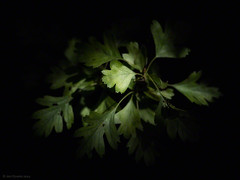 out of the dark (Jon Downs) Tags: uk white plant black blur color colour green art digital downs lumix photography grey photo jon flickr artist photographer image picture pic panasonic photograph stony milton keynes stratford emerge gf5 jondowns