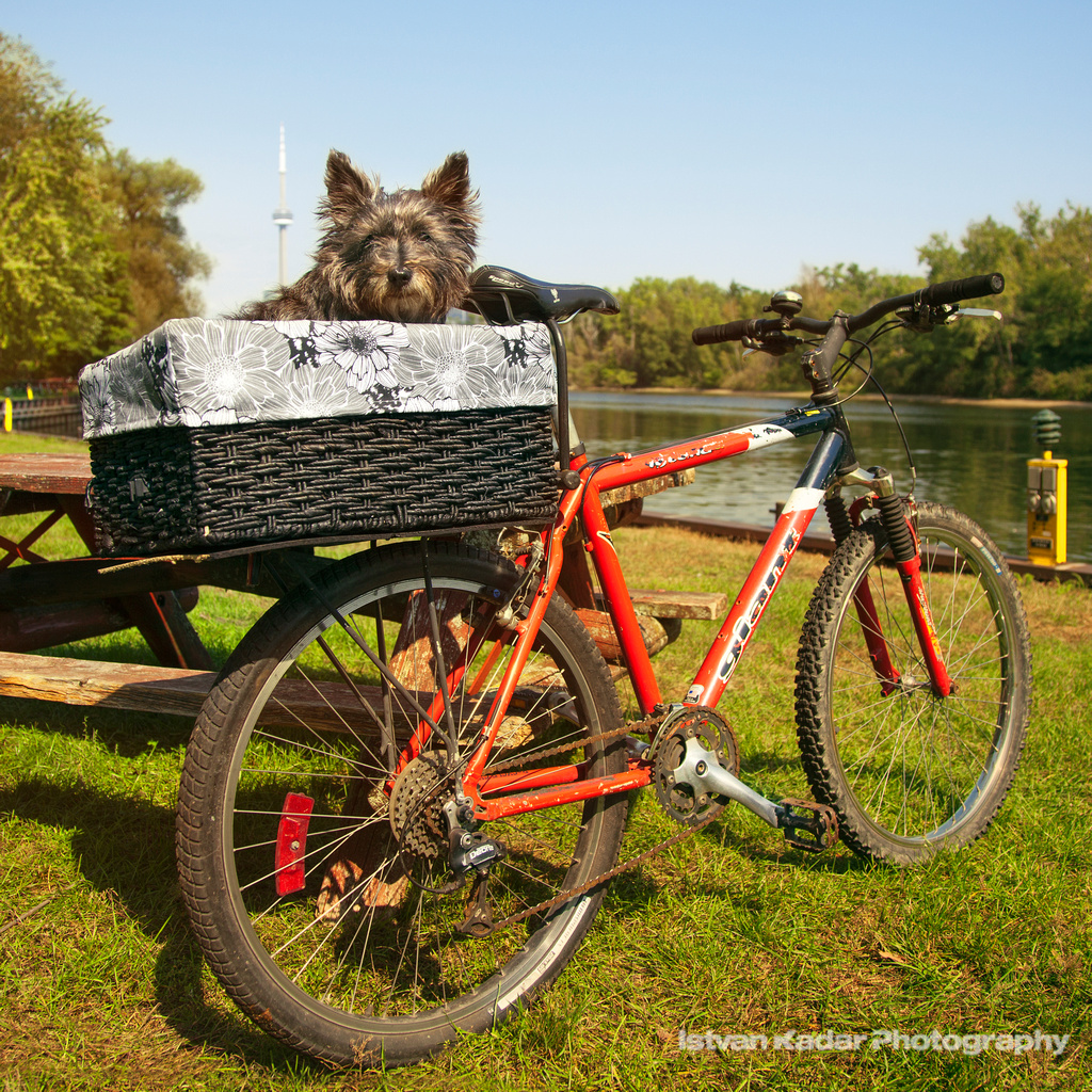 The World\'s Best Photos of bike and furry - Flickr Hive Mind