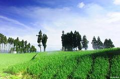 @ (monbydick) Tags:      cloud d90 landscape monbydick nikon scenery sky taiwan     exposure farm       sigma1020mm       cosmos