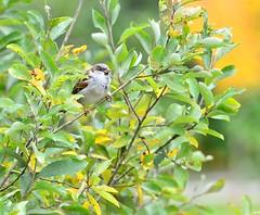 Resting (Moo Moo Savaloy) Tags: bird nature birds animal nikon wildlife 300 nikkor afs d600