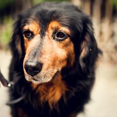 goodbye my friend - one (herr_der_inge) Tags: portrait dog pet beauty animal porträt hund haustier tier nikond90