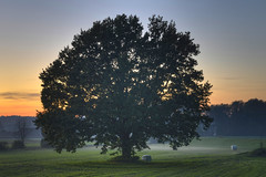 Tree (Daniel J. Mueller) Tags: sunset tree nature field grass forest landscape schweiz switzerland sonnenuntergang natur feld gras landschaft wald aargau baum hdr kanton 7xp birri d800e