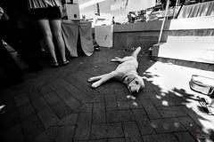dog day afternoon-5093_3 (BillRhodesPhoto) Tags: billrhodes asheville nc heat summer dog blackandwhite monochrome