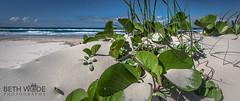 BEACH (Beth Wode Photography) Tags: beach sand saddune coastal jack bean seagrass ocean sea seascape whitesand beth wode bethwode moretonisland queensland