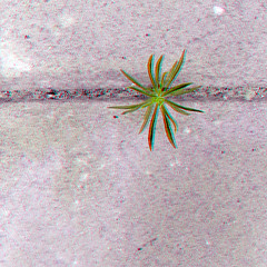 Anaglyph (Whatknot) Tags: 2016 anaglyph cracked tupelo mississippi whatknot weed 3d