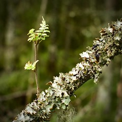 New life from an old branch (Bullpics) Tags: tree forest branch life woods oslo nikon d7100 bullpics norway marka nordmarka skiforeningen nature
