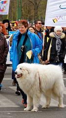 2016-04-17_14-46-39_ILCE-6300_9132_DxO (miguel.discart) Tags: 163mm 2016 animal animalphotography animals animalsupclose animaux belgium bru brussels brusselsattack bruxelles bxl bxllove bxlloveyou chien createdbydxo dog dogs dxo e18200mmf3563ossle editedphoto focallength163mm focallengthin35mmformat163mm freedom iambrussels ilce6300 iso200 jesuisbrussels jesuisbruxelles liberte nature naturephotography pedestrian pietonnier prayforbrussels prayforhumanity solidarity sony sonyilce6300 sonyilce6300e18200mmf3563ossle