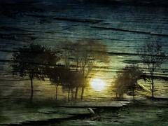 auf dem Holzweg . . . (smithjuha440) Tags: baum sonne dunkel holz holzbrett art fineart lightroom photoshop composition