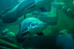 Acuario Agosto 2016 (02) (Fernando Soguero) Tags: acuario zaragoza acuariodezaragoza aragn turismo aquarium nikon d5000 fsoguero fernandosoguero