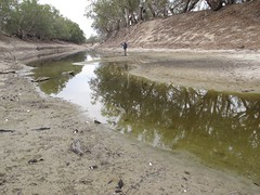 Looking upstream in the dried out bottom of the Darling R (spelio) Tags: simpson trip 2016 travel australia arid drought dry