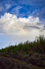 FAINTED RAINBOW (ferlopez) Tags: kahului mauihawaii usa