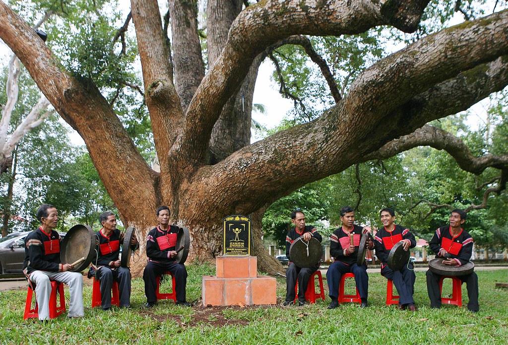 Lễ vinh danh Cây di sản Việt Nam hai cây Long Não tại Biệt điện Bảo Đại.
