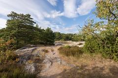 Archipelago landscape (Arild Vgen) Tags: summer green sandn sandhamn blir sky landscape outfit stockholmsskrgrd archipelago trees nature forest sommarnoje fs160828 fotosondag