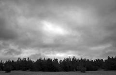 Pine Teee Line _ bw (Joe Josephs: 2,861,655 views - thank you) Tags: blackandwhitephotography blackandwhite landscapephotography landscapes landscape california californiacentralcoast californiacoast californialandscape travelphotography fineartphotography fineartprints joejosephs joejosephsphotography copyrightjoejosephsphotography fiscaliniranchpreserve cambriacalifornia cambria outdoorphotography travel hiking adventure