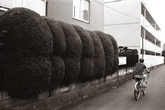 Near the surgery (efo) Tags: bw film nogata nakano tokyo japan bicycle topiary shrubbery minox35gt