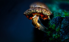 Decaying mushroom (strupert) Tags: autumn woodlands helicon focusstacking sigma180mm28 nikon dof mushroom closeup macro trndelag trondheim