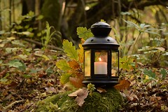 (adelina_tr) Tags: lantern autumn fall candle leaves forest