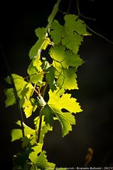 French landscapes  & vineyards (Benjamin Ballande) Tags: french landscapes vineyards