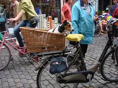 Travelling in Style (indigo_jones) Tags: dog holland netherlands bike bicycle utrecht basket nederland hond fiets