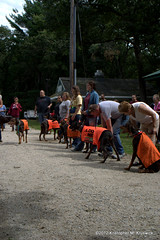 DRU Line up.... (kmkruswick) Tags: dru dog doberman dobie 2012 fallpicnic dobermanrescueunlimited