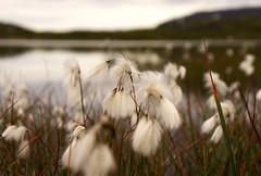 Haukeli Trip (Morten Hoff) Tags: mountain trekking hiking hike haukeli haukelifjell haukeliseter haukeliseterfjellstue