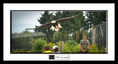 Falknerei Potzberg - Wild Park (MLechuga Photography) Tags: 2011 2012 7d action architecture art black blackandwhite white blue bokeh bw canon canoneos canoneos7d cars chrome city clouds colors digital dof dslr eos eos7d eu fall flower forest germany boy girl green hdr intheair is italy kaiserslautern lake landscape life light london macro man monsieuri mountain mountains music nature new night old orange people photo photography portrait red reflections rock sigma sky snow street summertime sun sunset travel tree trees usa usm wideangle world