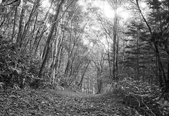 Path in the woods (threepinner) Tags: japan forest canon 50mm woods ae1 path north era   f18 hokkaidou northernjapan hobetsu nfd mukawa  mountainsnaps   finedol mtbouzu