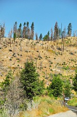 Yosemite National Park (faungg) Tags: park travel trees sky usa mountains green nature us national yosemite yosemitenationalpark