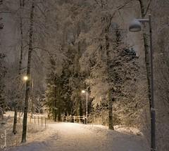 20120118_29536b (Fantasyfan.) Tags: trees winter snow topv111 night finland dark lights helsinki long exposure frost path atmosphere kannelmki fantasyfanin siirretty