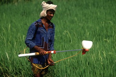 Farmer spraying rice field with insecticide (FAO Research & Extension) Tags: india farmer ricefields insecticide hyderabaddistrict
