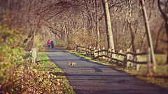 Happy Fence Friday {Sharing the Trail} Edition! (pixelmama) Tags: autumn fall illinois squirrel hikers hff northaurora eightdaysaweek thehumanelement fencefriday pixelmama theanimalelement lesarendscountyforestpreserve