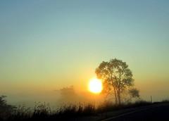 52 Weeks...Week 39: Break The Rules (elliemae224) Tags: trees fog sunrise canon 2012 week39 522012 52weeksthe2012edition weekofseptember23