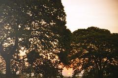 O cu alm das palavras. (@diegonunes_) Tags: sky sun sunshine nikon cu d5100