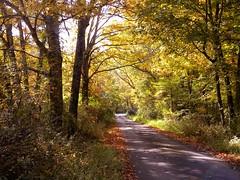Changing Colors -- Explore 235 (cscott_va.) Tags: virginia explore braleypond fall2012