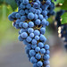 2012 Dilworth Cabernet Harvest 0007