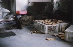 Insulsa rutina (Guido Peri en Fotos) Tags: dog bread sadness sad slow boring perro triste dirt tired basura rutina pan grime canonet cansado routine aburrido suciedad tiresome cucha mugre wearisome dirtiness