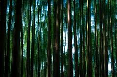 Forest Light (Repp1) Tags: trees forest arbres motionblur fort floudemouvement