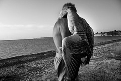 IMGP6627-stavrosstam (stavrosstam) Tags: street bw man beach hug goose sureal