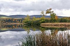 Mirror (Flapweb) Tags: sun reflection pond vermont foliage shelburne photosandcalendar worldwidelandscapes panoramafotogrfico thebestofmimamorsgroups theoriginalgoldseal magicmomentsinyourlifelevel1